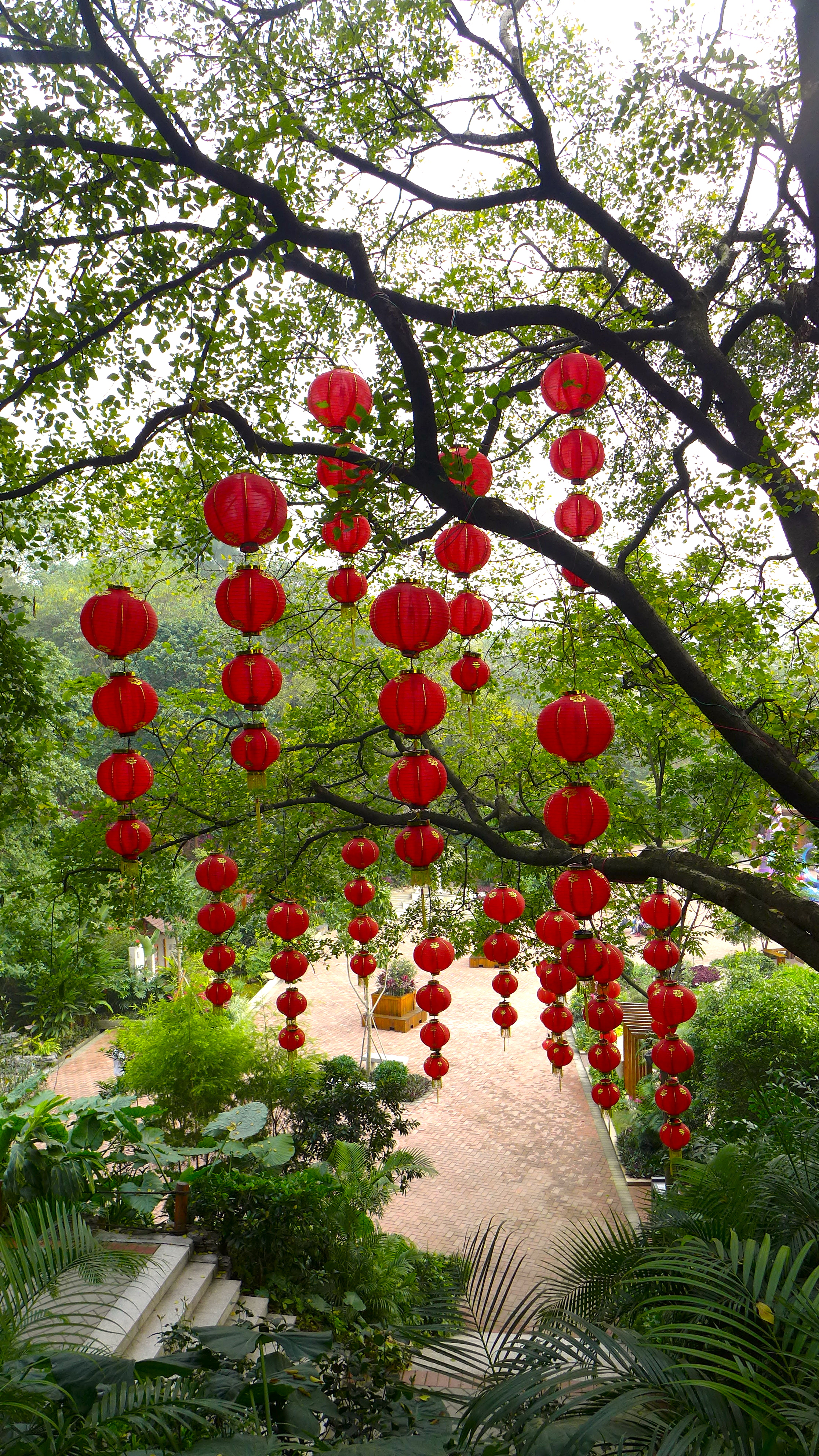 apens år kinesisk
